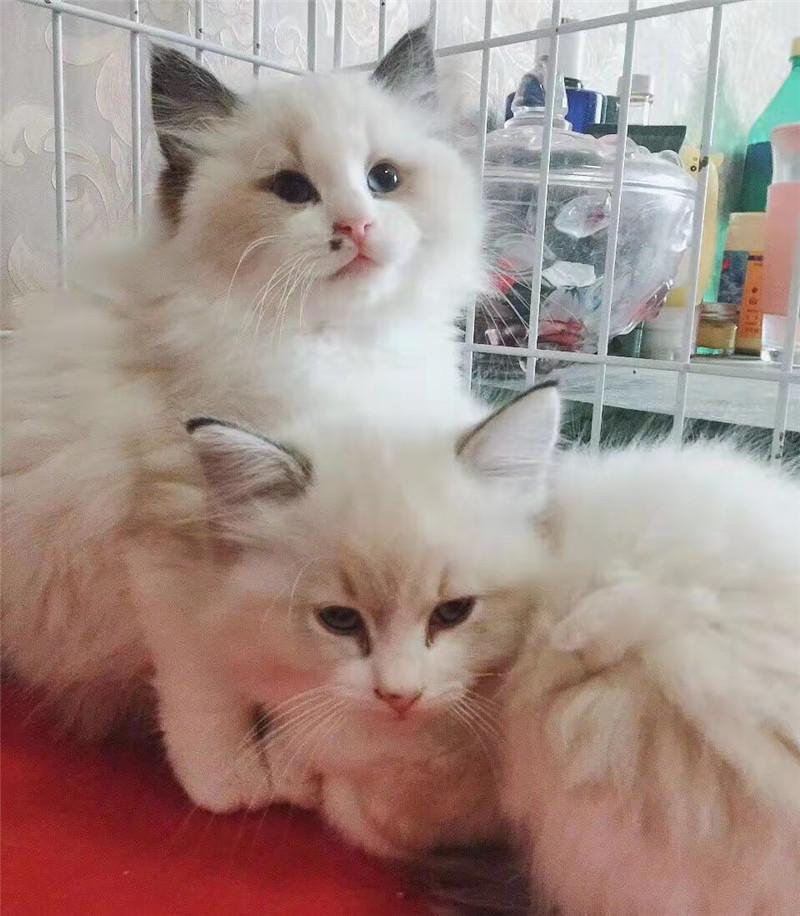 治愈系吸猫指南丨合肥猫咖,作为猫奴一员,你怎能错过