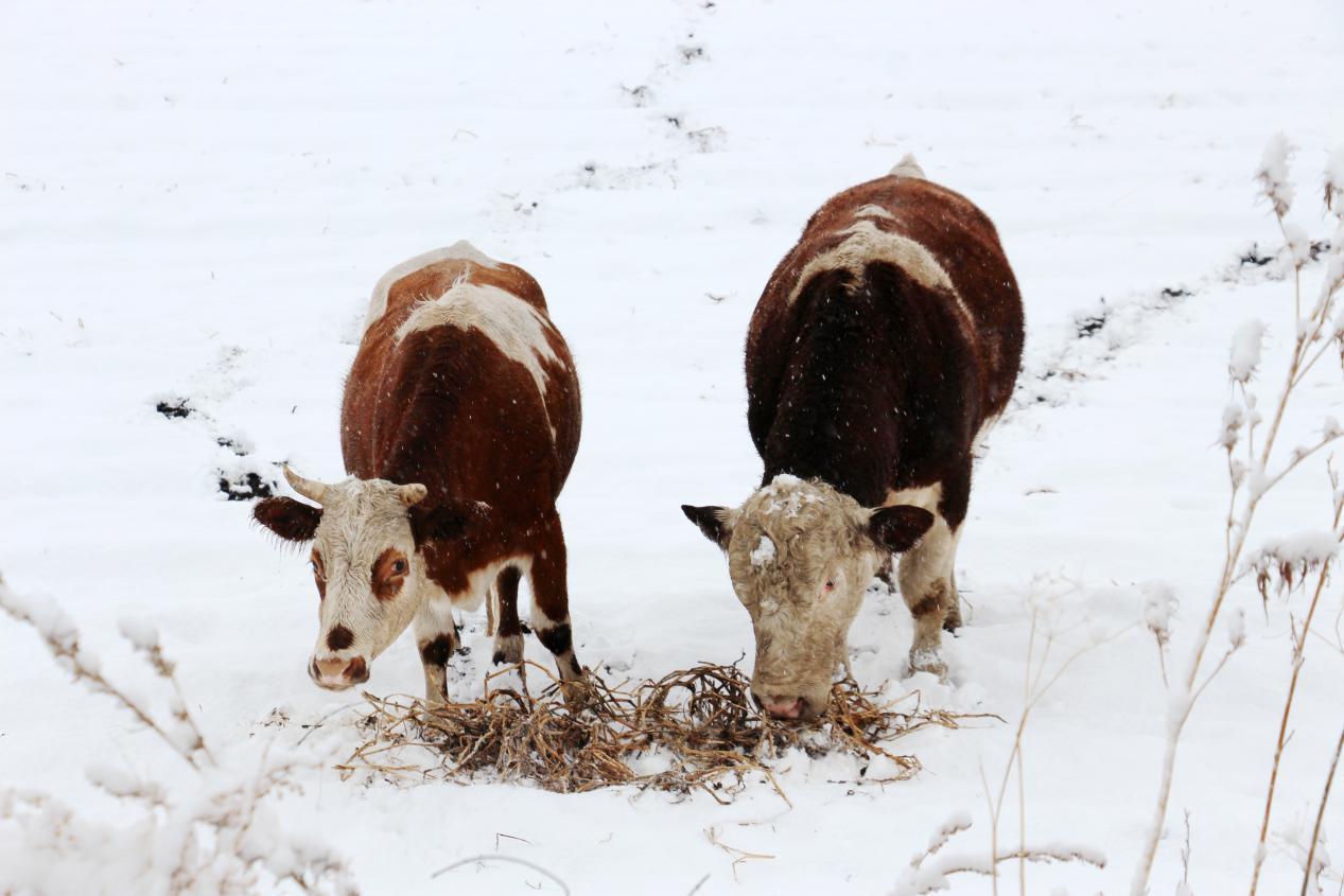 四季皆胜景,冬季最销魂的承德御道口草原