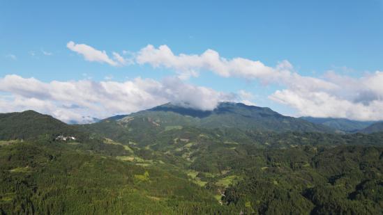 传承山茶油文化,湜润夫人跨越多地开展助农护农计划