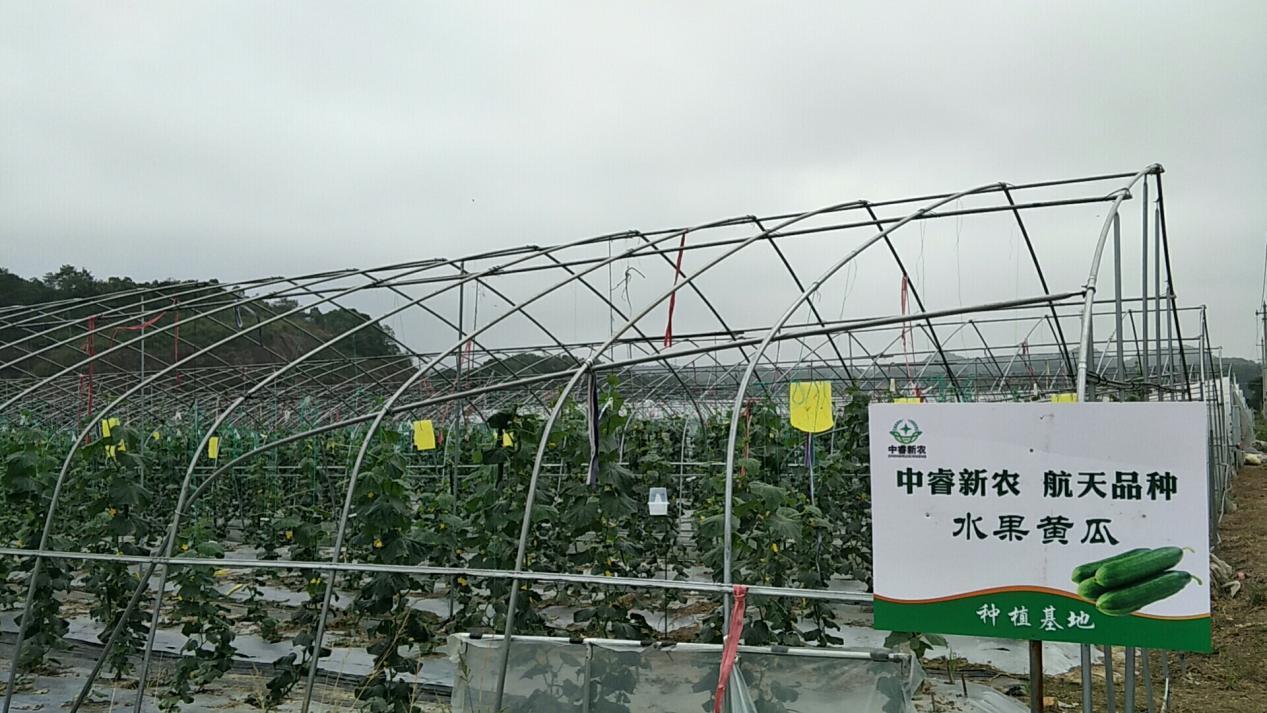 脱贫攻坚!中睿新农航天育种有机瓜果促进农业发展