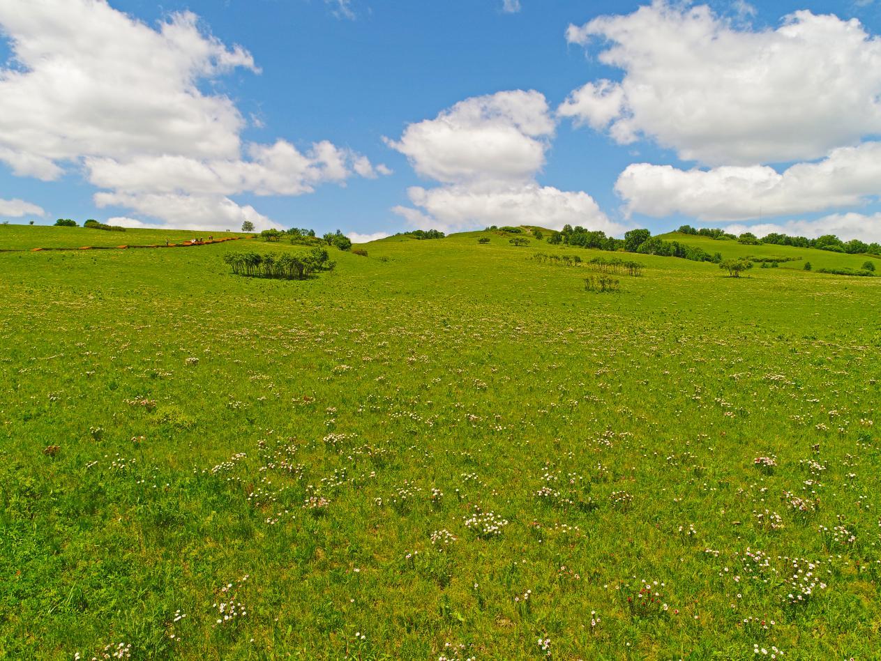 七月,约起来!看御道口草原最美的风景