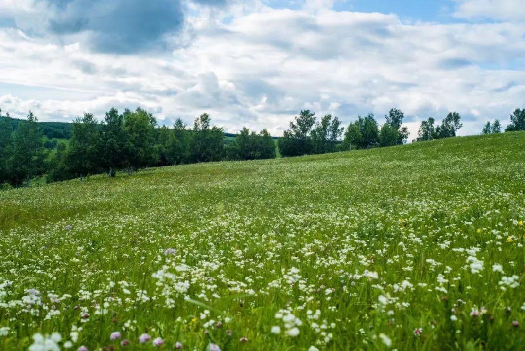 七月夏日,坝上御道口草原森林风景区独有的风景